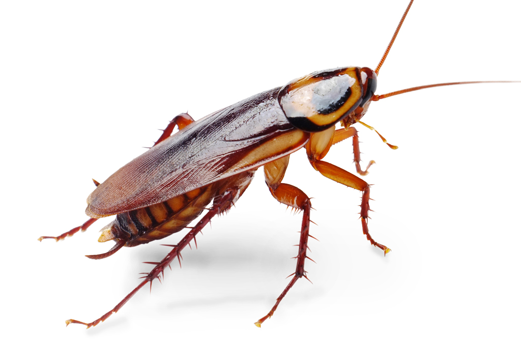 roaches-bugs
